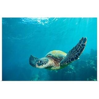 """Green sea turtle"" Poster Print"