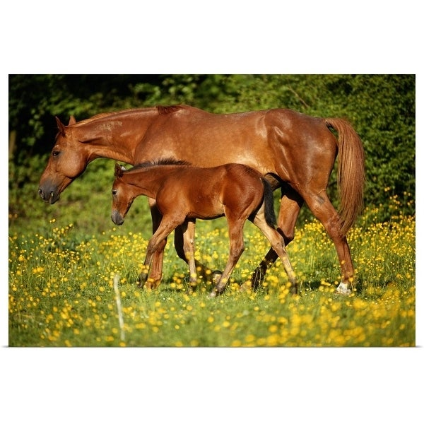 """""""Arabian horse with foal in field, side view"""" Poster Print"""