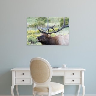 Easy Art Prints Diane Johnson's 'Rocky Mountain National Park American Elk' Premium Canvas Art