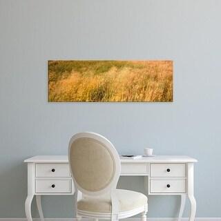 Easy Art Prints Panoramic Images's 'Curing grass, Quail Hollow Ranch Park, Felton, Santa Cruz California' Canvas Art
