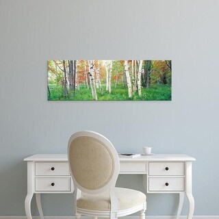 Easy Art Prints Panoramic Image 'Birch trees in a forest, Acadia National Park, Hancock County, Maine' Canvas Art