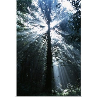 """Sunshine Through Mist And Trees"" Poster Print"