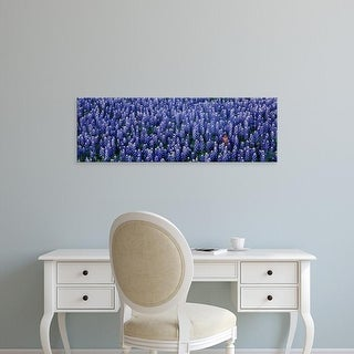 Easy Art Prints Panoramic Images's 'Bluebonnet flowers in a field, Hill county, Texas, USA' Premium Canvas Art
