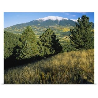 Poster Print entitled Trees on a landscape with snowcapped mountains in the background, Hart Prairie, Kachina Peaks
