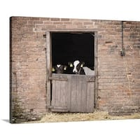 Premium Thick-Wrap Canvas entitled Cows standing at gate of barn