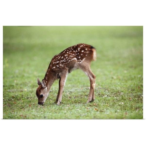 """Spotted Deer fawn, Nara Prefecture, Honshu, Japan"" Poster Print"