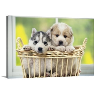 """Siberian Husky and Mongrel"" Canvas Wall Art"