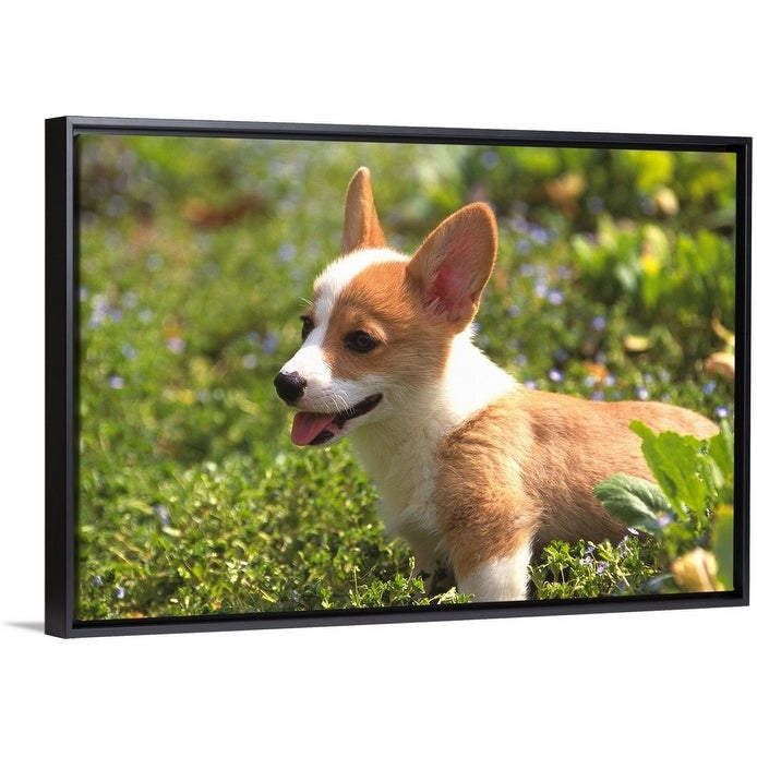 Welsh Corgi Black Float Frame Canvas Art Overstock 25505294