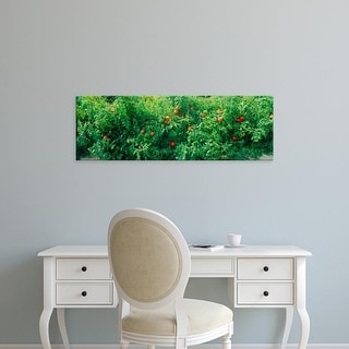 Easy Art Prints Panoramic Images's 'Tomato plants in a field' Premium Canvas Art