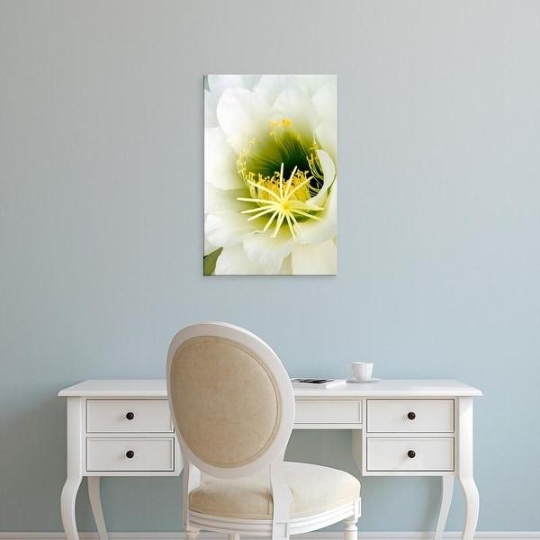 Easy Art Prints Peter Hawkins's 'Night Blooming Cereus' Premium Canvas Art