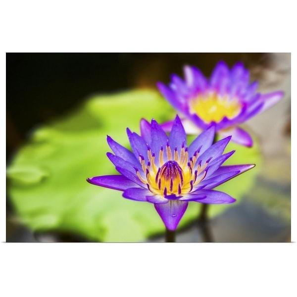 """""""Lotus flower"""" Poster Print"""