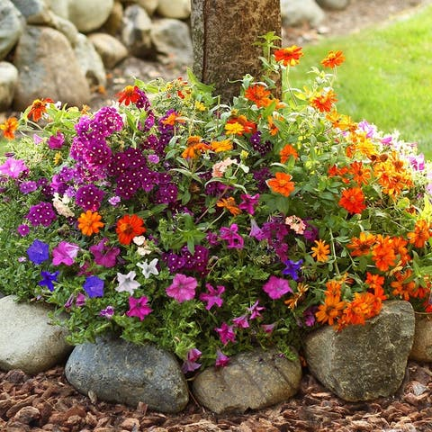 Sunny Annual Pre-Seeded Flower Mat with Soil & Plant Food