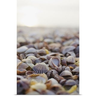 Poster Print entitled USA, New York State, East Hampton, Shells on beach