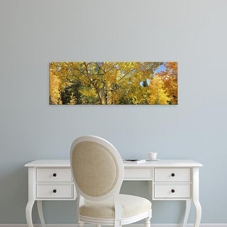 Easy Art Prints Panoramic Images's 'Aspen trees in autumn, Colorado, USA' Premium Canvas Art