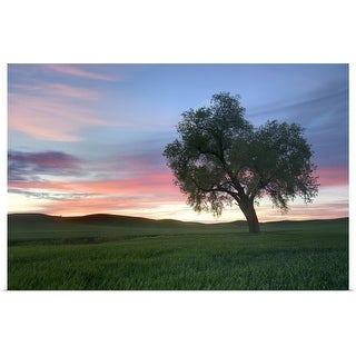 """""""Lonely tree at sunset in Palouse wheat fields."""" Poster Print"""