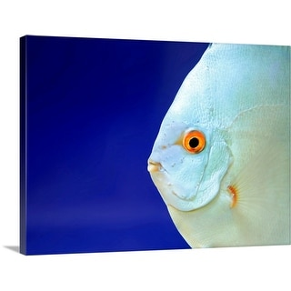 """Close up of fish."" Canvas Wall Art"
