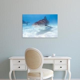 Easy Art Prints Stuart Westmorland's 'Tiger Sharks' Premium Canvas Art