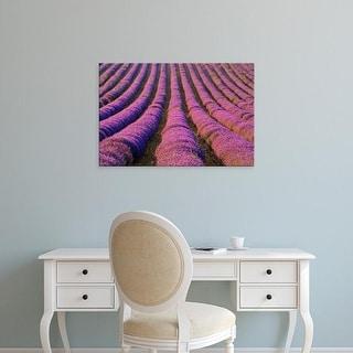 Easy Art Prints Jaynes Gallery's 'Lavender Rows' Premium Canvas Art