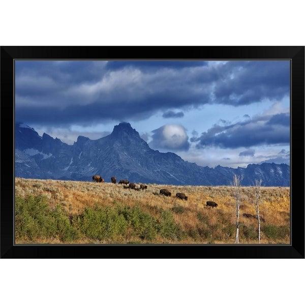"""Migration - Grand Teton National Park"" Black Framed Print"