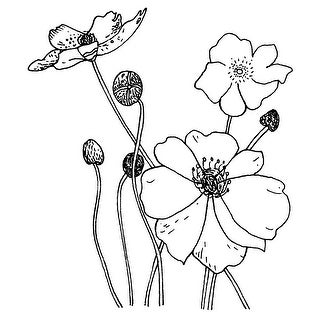 "Penny Black Mounted Rubber Stamp 2.75""X2.75""-Poppies"