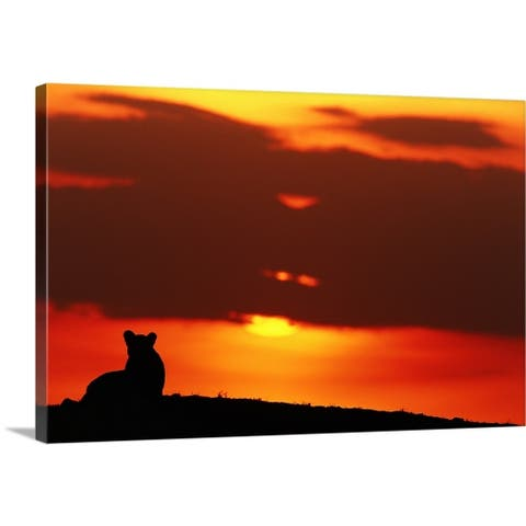 Lioness (Panthera leo) sitting, at sunset, Masai Mara, Kenya - Multi-Color