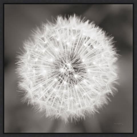 Canvas Art Framed 'Dandelion Seedhead' by Alan Majchrowicz 16-inch