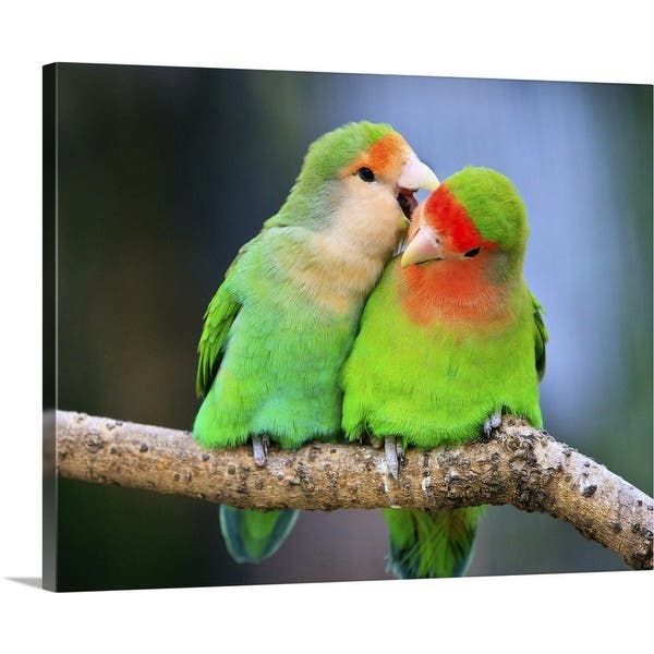 Shop Two Peach Faced Lovebirds Whispering To Each Other In Shanghai Zoo Canvas Wall Art Overstock 16472778