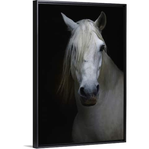 """""""White horse in shadow"""" Black Float Frame Canvas Art"""
