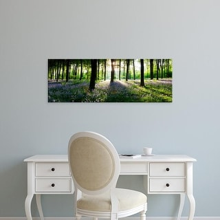 Easy Art Prints Panoramic Image 'Bluebells growing in a forest, Micheldever, Hampshire, England' Canvas Art