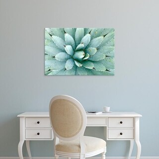 Easy Art Prints Rob Tilley's 'Agave' Premium Canvas Art