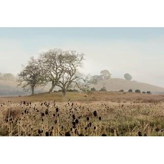 Easy Art Prints Alan Blaustein's 'Oak Tree #68' Premium Canvas Art