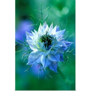 """""""Close-up of blue annual flower"""" Poster Print"""