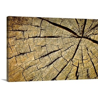 """Tree trunk"" Canvas Wall Art"