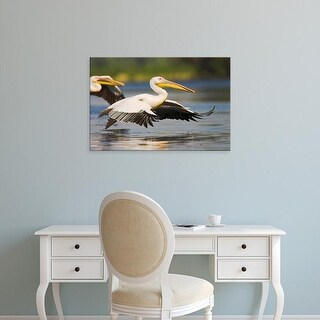 Easy Art Prints Martin Zwick's 'Great White Pelican Ii' Premium Canvas Art
