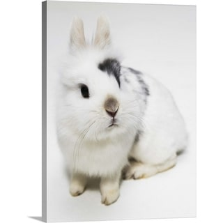 """""""White, black and brown rabbit"""" Canvas Wall Art"""