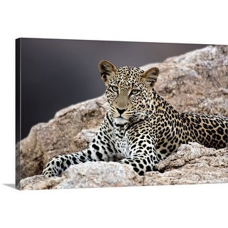 Premium Thick-Wrap Canvas entitled Close-up of a leopard lying on a rock