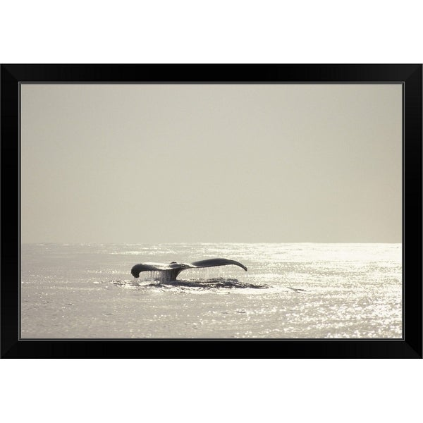 """""""Humpback whale, tail over water surface, copy space, Hawaii, USA"""" Black Framed Print"""