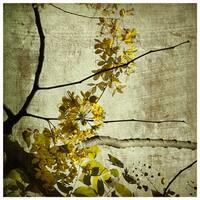 ''Yellow Kerala Blossoms'' by Anon Fairfield Art Publishing Art Print (16.5 x 16.5 in.)