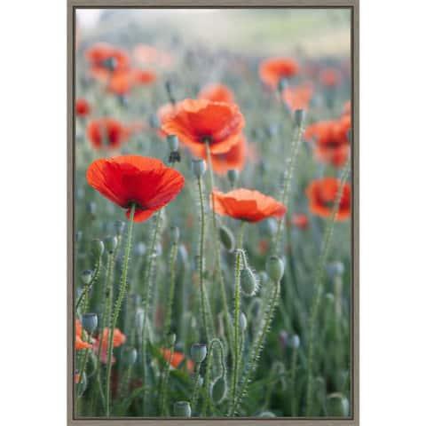 Poppies in bloom by Brent Bergherm Danita Delimont Framed Canvas Art