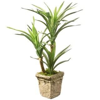 """14"""" Yucca Plant"""