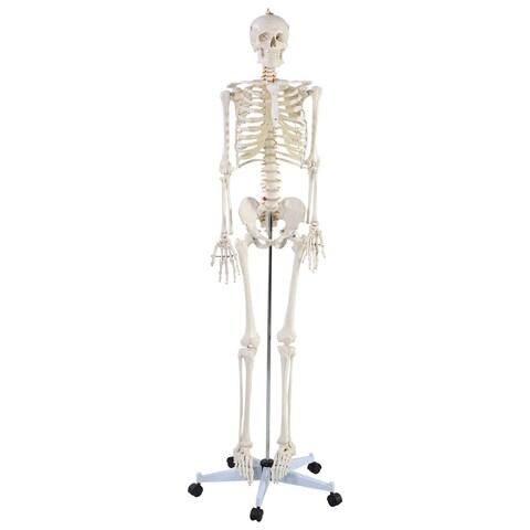 Costway Life Size Human Anatomical Anatomy Skeleton Medical Model + Stand