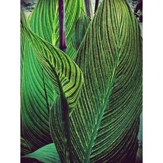 Green Plant Photograph Art Print