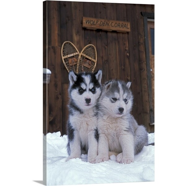 Premium Thick-Wrap Canvas entitled Two Siberian Husky puppies sitting in the snow - Multi-color
