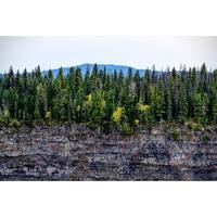 Forest Cliff Photograph Art Print