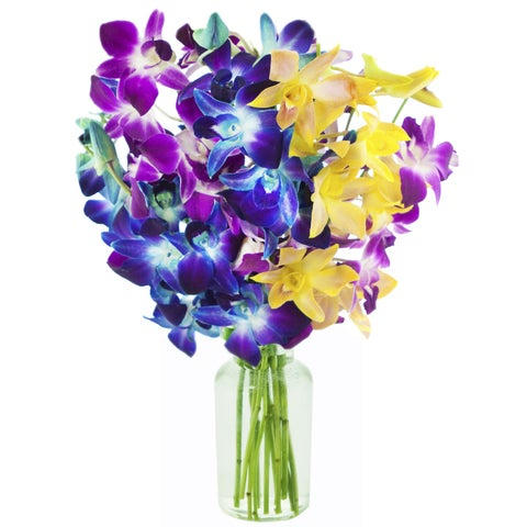 KaBloom: Exotic Rainbow Orchid Bouquet of 5 Blue, 3 Purple and 2 Yellow Dendrobium Orchids with Vase