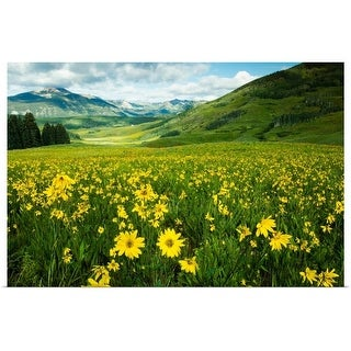 """""""Scenic view of wildflowers in a field, Crested Butte, Colorado"""" Poster Print"""