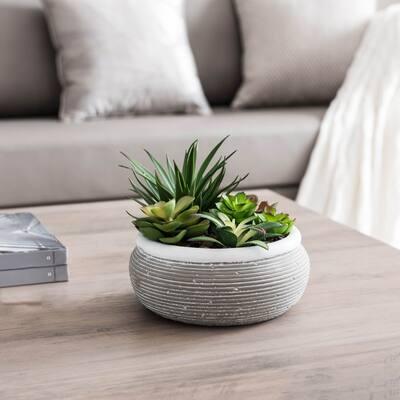 Succulent Garden in Cement pot