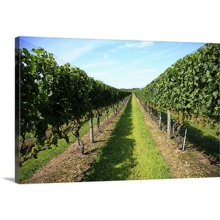 """Vineyard Long Island New York"" Canvas Wall Art"