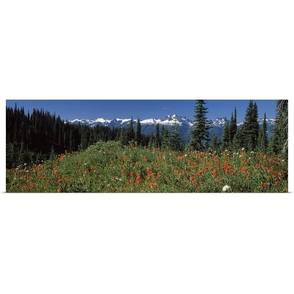 """Wildflowers in a field, Mt Revelstoke National Park, British Columbia, Canada"" Poster Print"