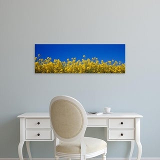 Easy Art Prints Panoramic Images's 'Rape field in bloom under blue sky' Premium Canvas Art